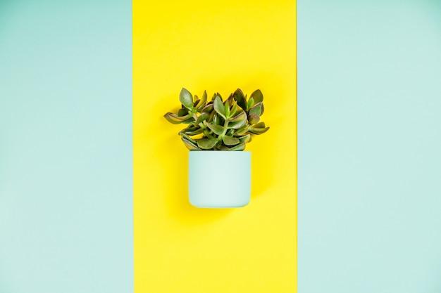 Succulento sul tavolo di colori pastello. disteso, copia spazio