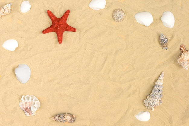 Sulla sabbia si trovano diverse conchiglie e una stella marina rossa.
