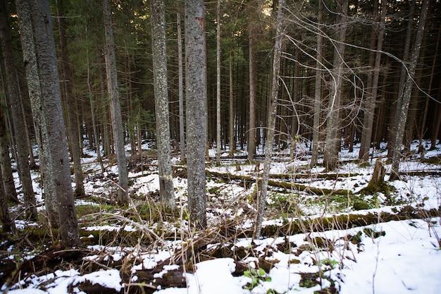 Sulla strada per l'occhio di mare in polonia. la strada per la foresta. alti tatra.