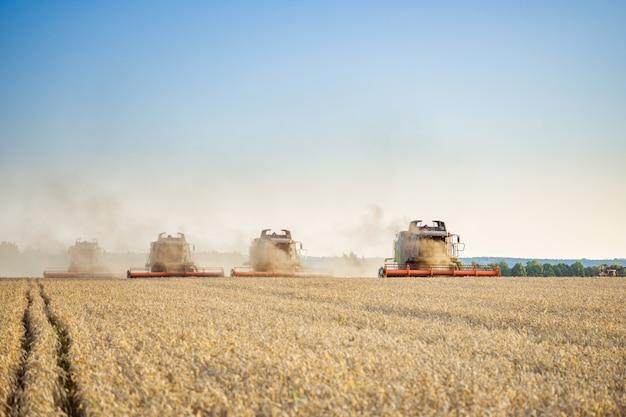 Sullo sfondo di una giornata di sole estivo e cielo azzurro con nuvole. mietitrebbiatrice raccolta grano dorato maturo sul campo. l'immagine del settore agricolo