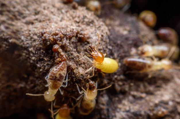 Super macro immagine di termiti che costruiscono il loro nido