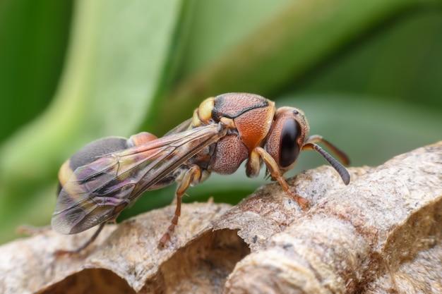 Super macro vespa sul nido