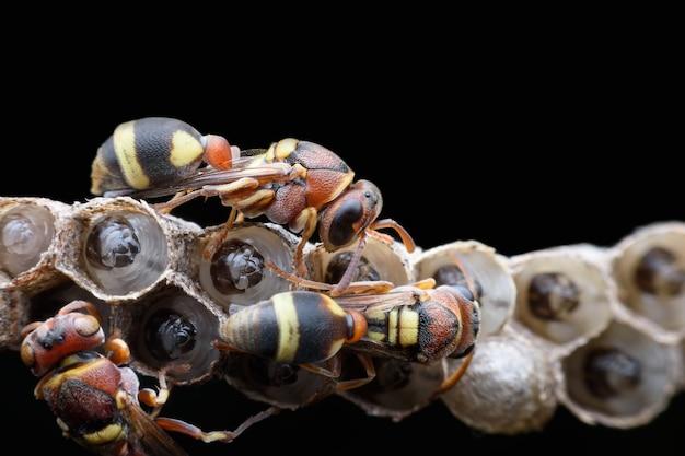 Super macro vespe e larve su sfondo nero