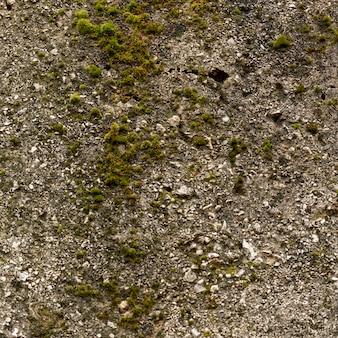 Superficie del cemento con rocce e muschio