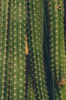Superficie di moda cactus. art design minimal stillife