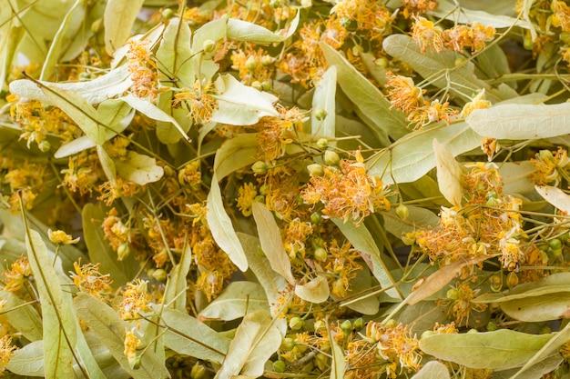 Superficie floreale di fiori di tiglio. avvicinamento