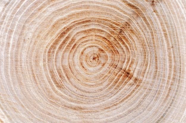Superficie naturale degli anelli degli alberi