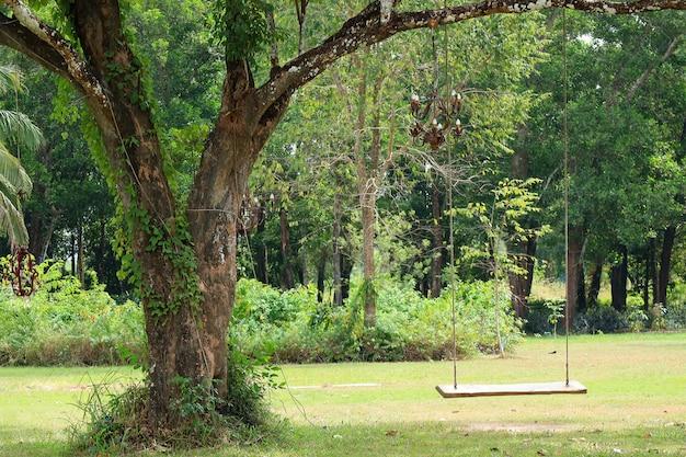 Svuoti l'oscillazione di legno che pende da un grande albero nel giardino verde