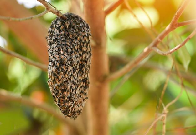 Swarm beehive honeycomb sull'albero