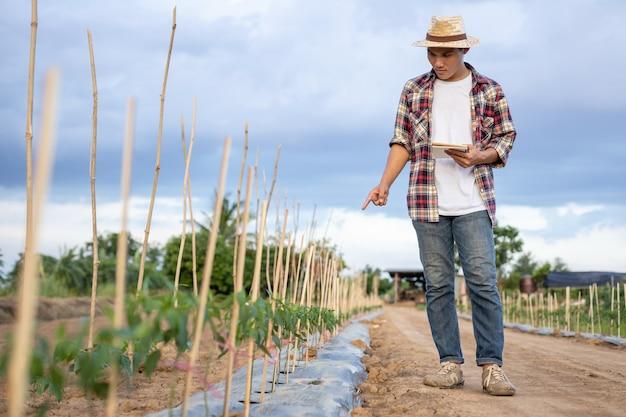 Taccuino asiatico della tenuta del coltivatore e controllare la sua pianta o verdura (albero di peperoncini rossi)