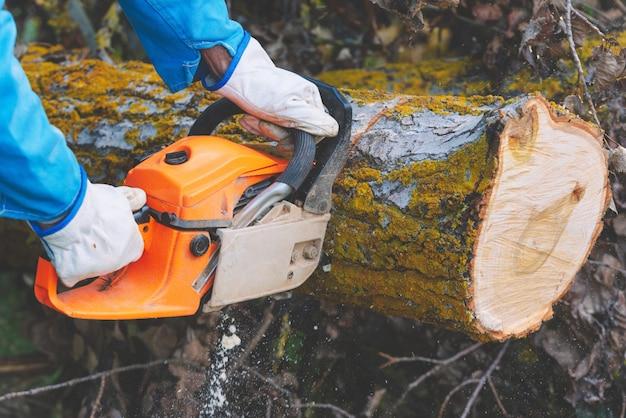 Taglialegna che taglia legno vecchio con una motosega
