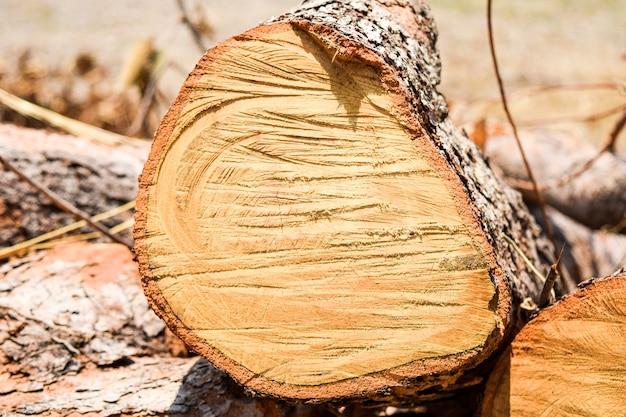 Taglio dell'albero di legname