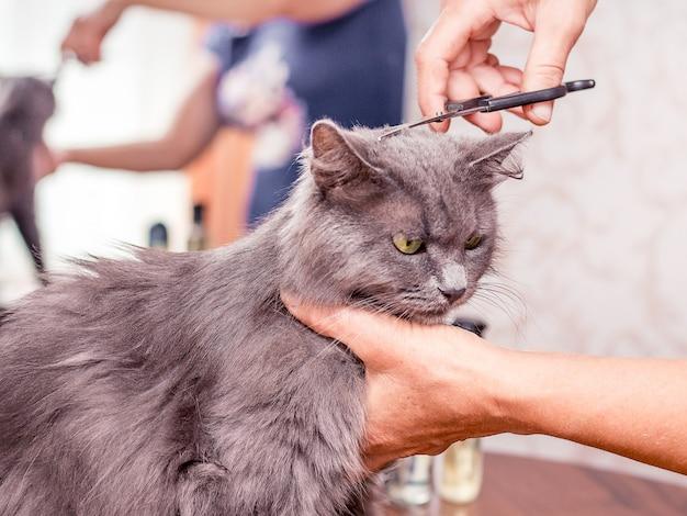 Taglio di capelli un gatto peloso. taglio di capelli nel salone di bellezza. servizi professionali di parrucchiere