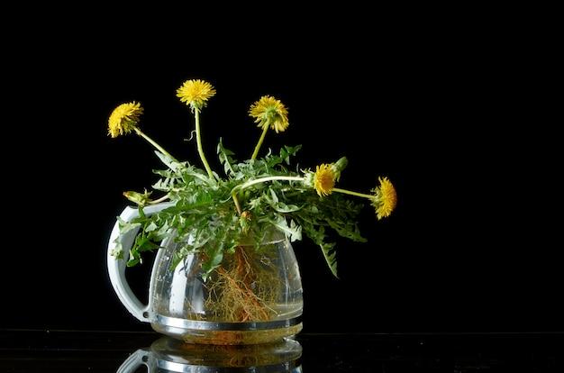 Tarassaco con radici e foglie in una teiera di vetro su un buio
