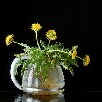 Tarassaco con radici e foglie in una teiera di vetro