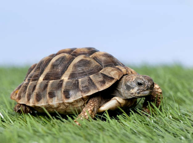 Tartaruga su erba contro un cielo blu