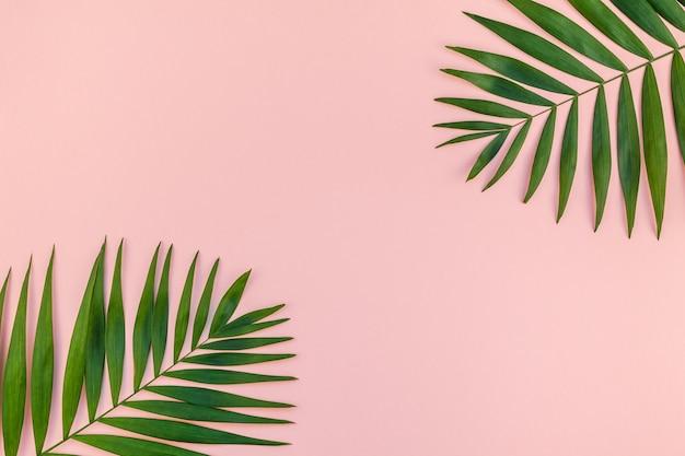 Tavolo rosa con foglie di palma tropicale