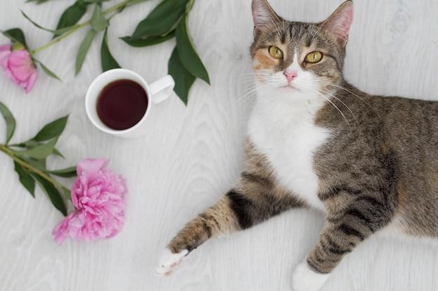 Tazza di caffè nero e peonia e gatto su bianco