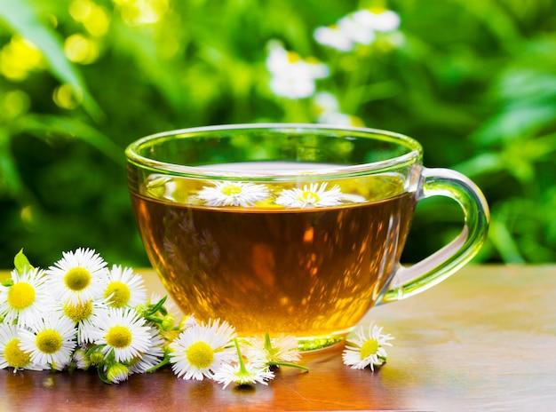 Tazza di vetro di tè con i fiori della camomilla e la camomilla sul primo piano naturale verde del fondo della vegetazione