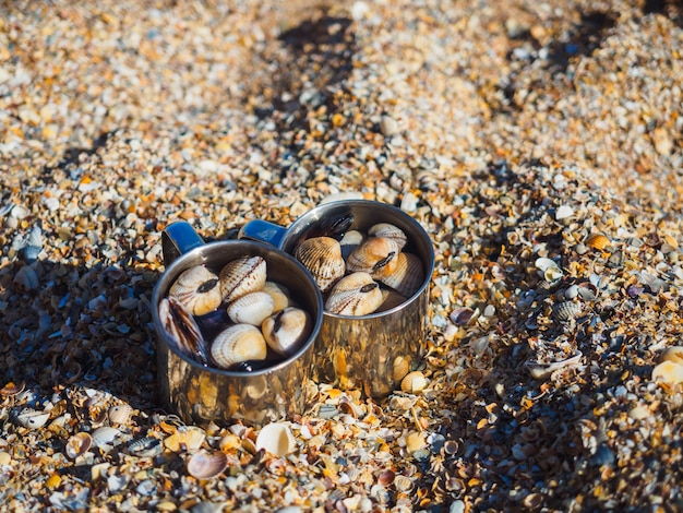 Tazze con conchiglie in riva al mare sulla baia di conchiglie del mar d'azov