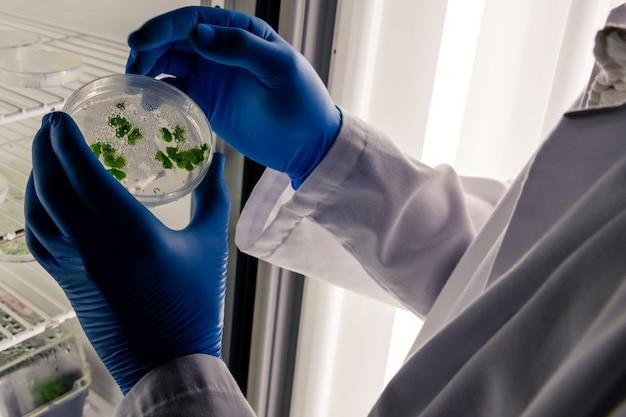 Tecnico di laboratorio che esamina una sostanza verde su una capsula di petri mentre conduce una ricerca sul coronavirus