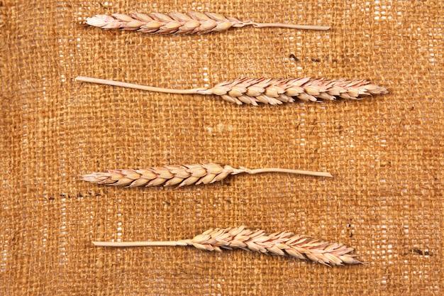 Tela di sacco e grano