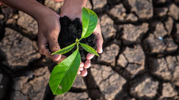 Tema del riscaldamento globale mani umane che difendono il germoglio dell'erba verde che sale dalla terra incrinata senza pioggia.