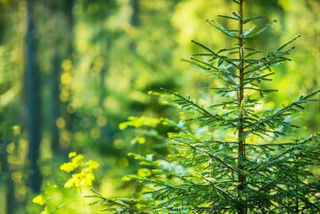 Tema della foresta crescente