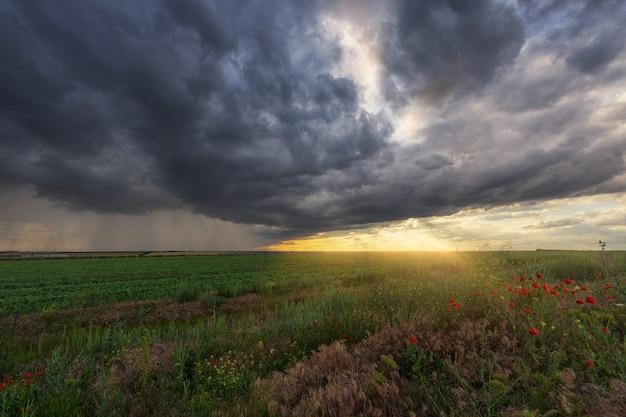 Temporale su un campo verde con papaveri in primo piano, strisce di pioggia in lontananza e raggi del sole dalle nuvole