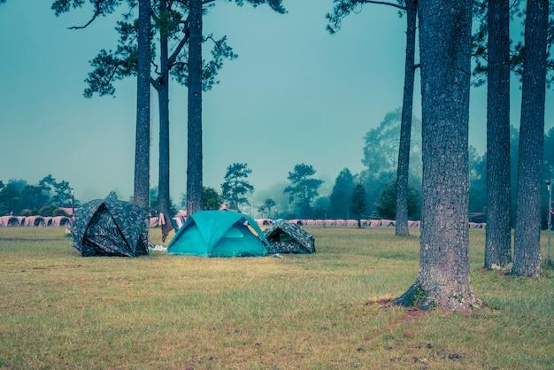 Tenda da campeggio con i pini al parco nazionale di phukradueng, tailandia