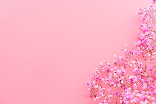 Teneri ramoscelli di fiori freschi