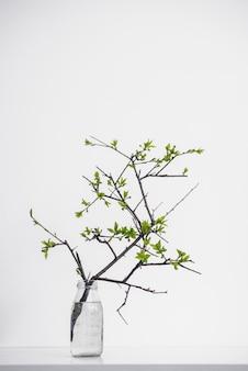 Tenuta della pianta verde del ramo su bianco