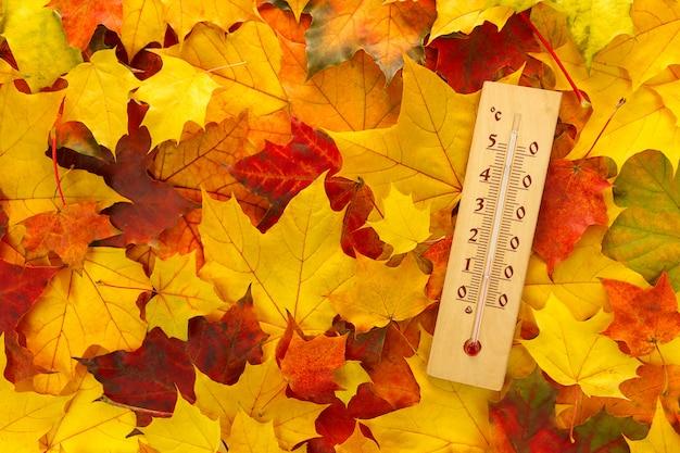 Termometro per legno che segna 15 gradi celsius. termometro su acero colorato. autunno