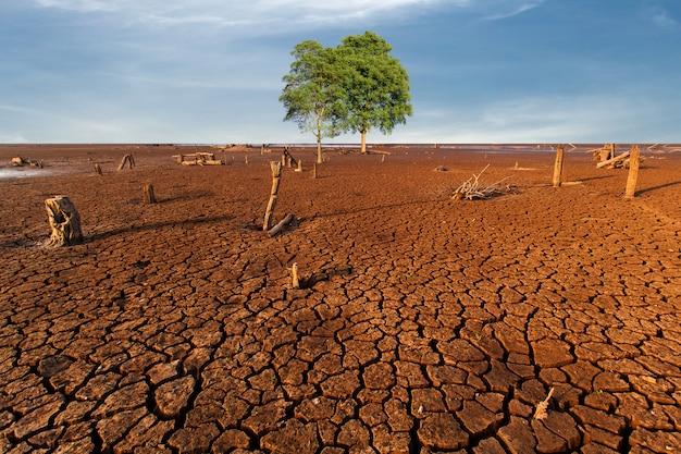 Terra asciutta incrinata dell'albero senza acqua. estratto.