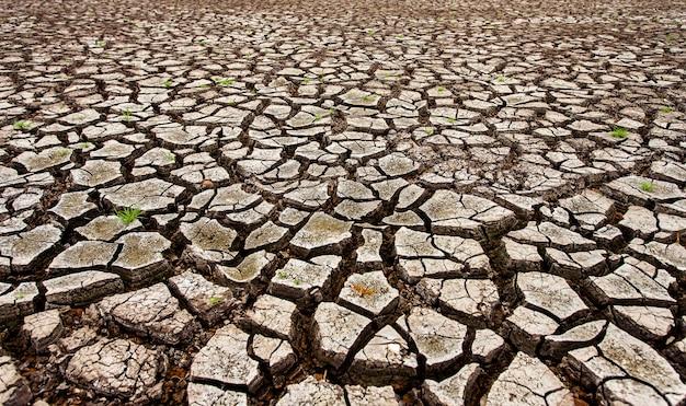 Terra asciutta incrinata senza wate