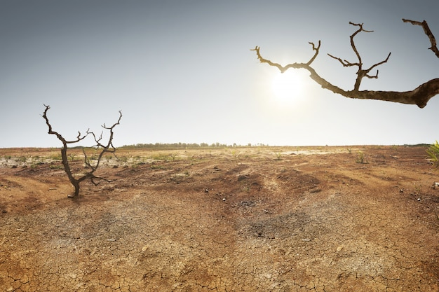 Terra incrinata con erba e albero secco