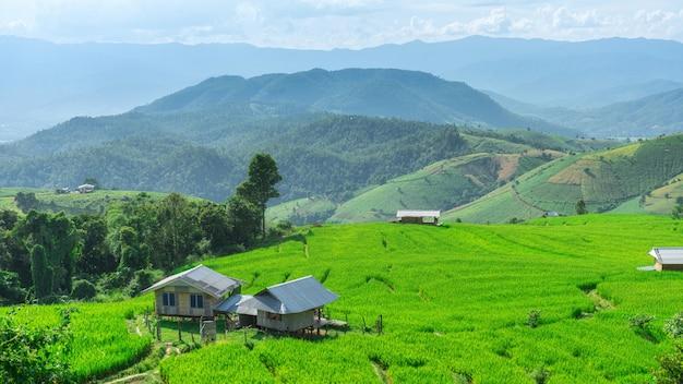 Terrazze del riso di pa bong piang in mae chaem, chiang mai, tailandia.