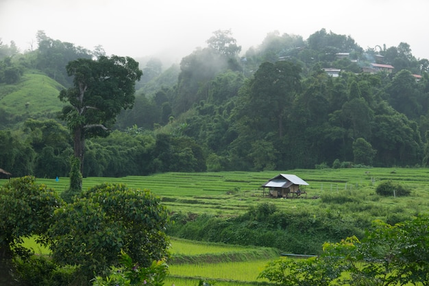 Terrazze di riso con casetta