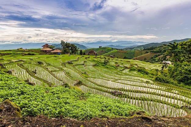 Terrazzi nella stagione delle pioggie, chaingmai, tailandia di pa bong piang rice