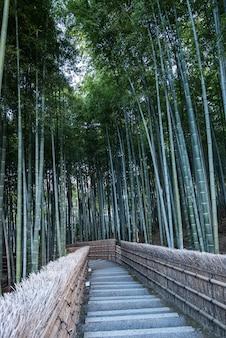 Terreno boscoso di bambù al tempio di adashino nenbutsu-ji, kyoto giappone