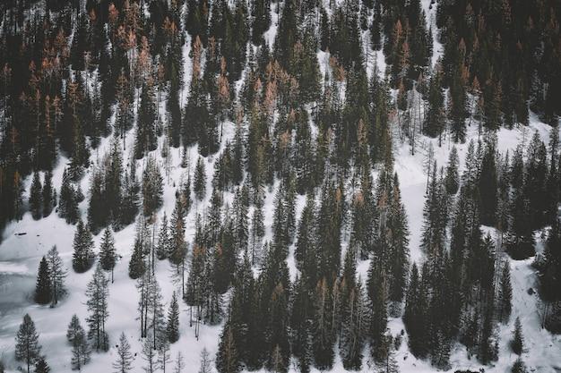 Terreno coperto di neve con alberi di pino
