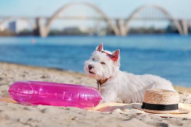 Terrier di altopiano ad ovest bianco che pone alla spiaggia sabbiosa amichevole del cane
