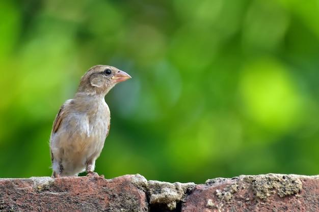 Tessitori uccelli con la natura