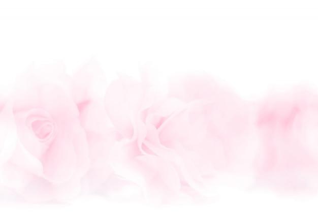 Tessuto di fiori di rosa colorato realizzato con sfumatura per lo sfondo