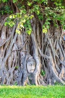 Testa della statua di buddha nelle radici dell'albero a wat mahathat nella provincia di ayutthaya, tailandia