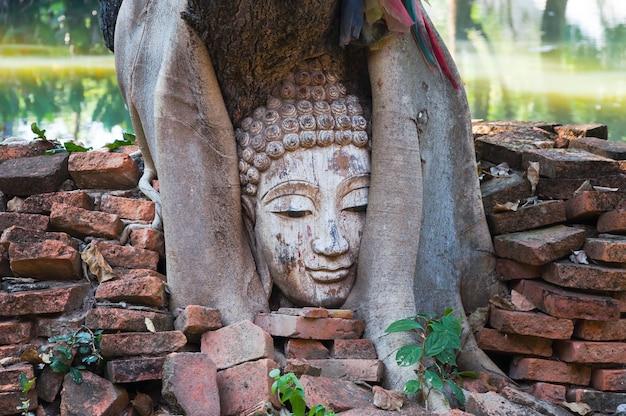 Testa di buddha in albero di banyan nel sito archeologico della tailandia del nord, arte tailandese di tradizione