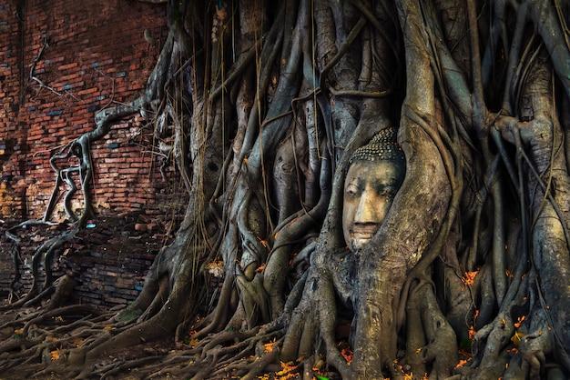 Testa di buddha nelle radici dell'albero al wat mahathat ayuthaya, tailandia.