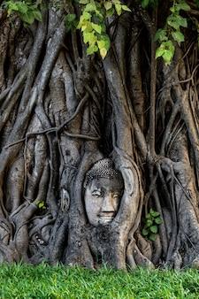 Testa di phra buddha attaccata ad un albero, ayutthaya