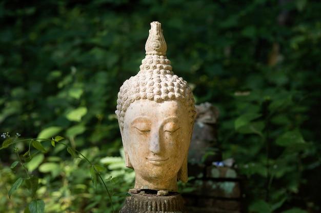 Teste di buddha su sfondo verde