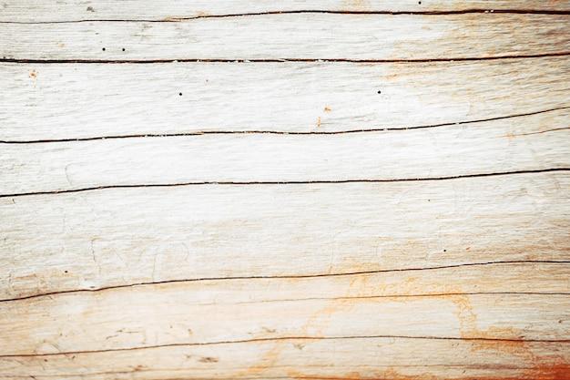 Texture di albero di corteccia